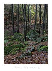 "Harz- Impressionen "" im ILsetal """