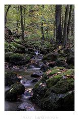 "Harz- Impressionen "" im Riefenbachtal """