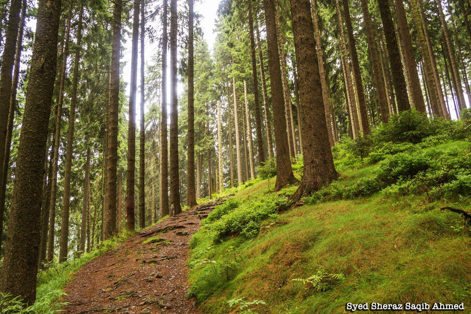 Harzer Hexenstieg - Mecklenburger Weg Schlucht,Pfad,Wald)