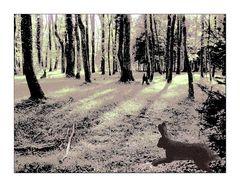 Hase und Häschen im Wald