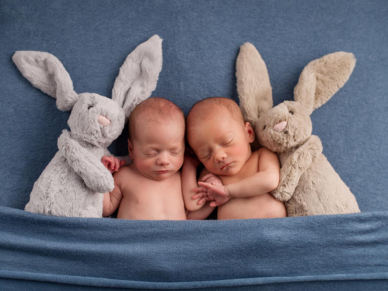 40 hasen baby bilder  besten bilder von ausmalbilder