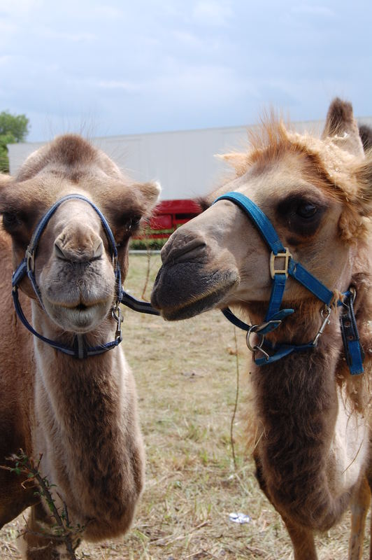 Hast du ne Camel für mich