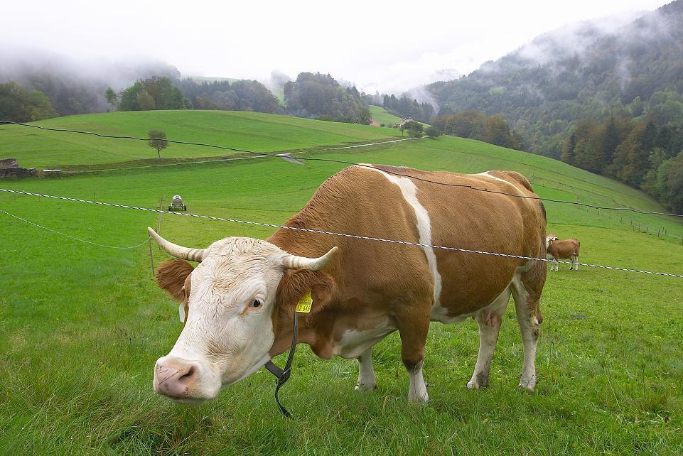 """""""Hast du noch nie eine Kuh gesehen?"""""""