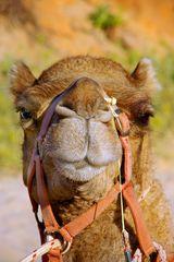 Haste mal ne Camel?