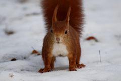 Hat da jemand Nüsse gesagt?