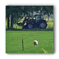 Hat jemand ein Schaf verloren?