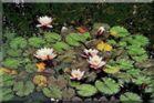 Hat was von Monet......