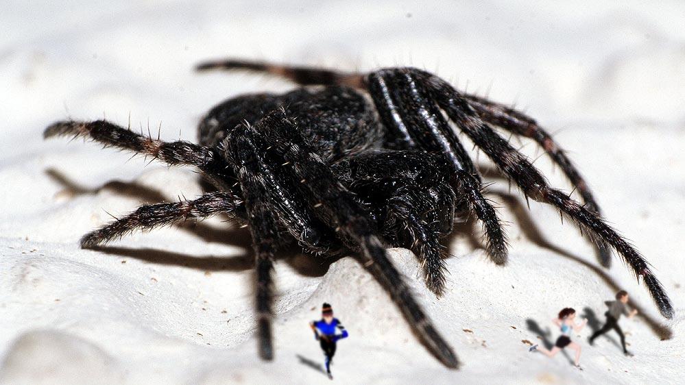 Hat wer meine Spinne gesehen?
