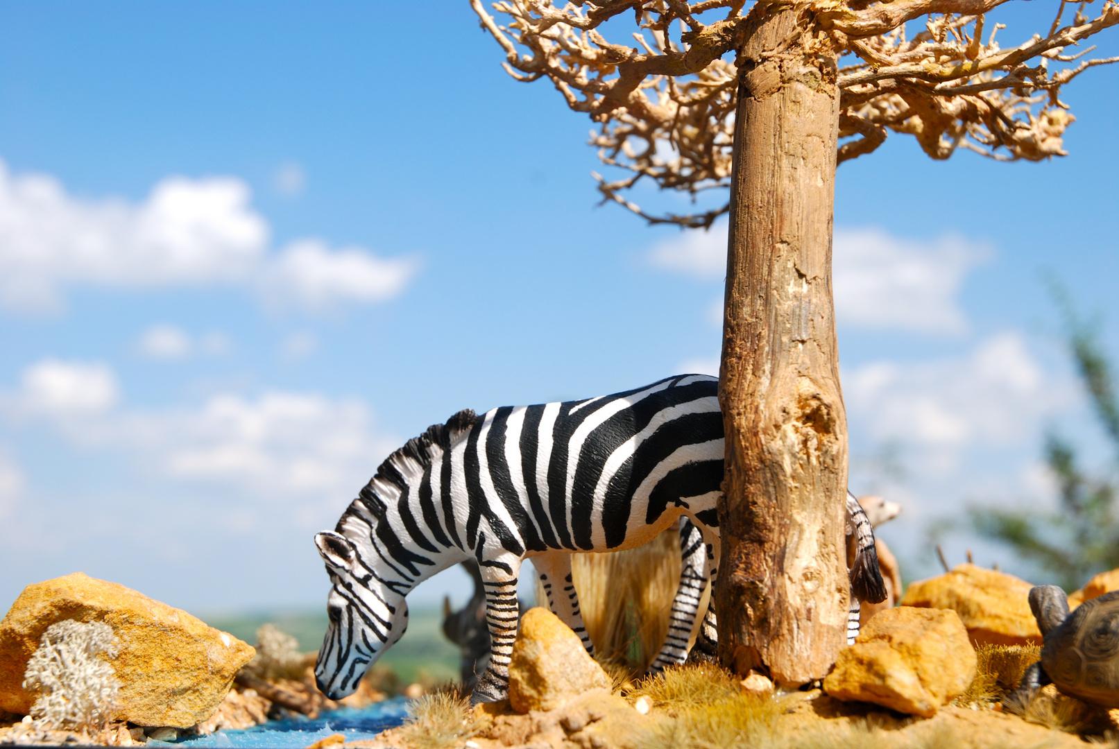 Hatari Diorama, Zebra