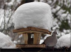 Haube und Taube