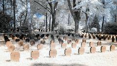 Hauptfriedhof FFM - Weltkriegsopfer