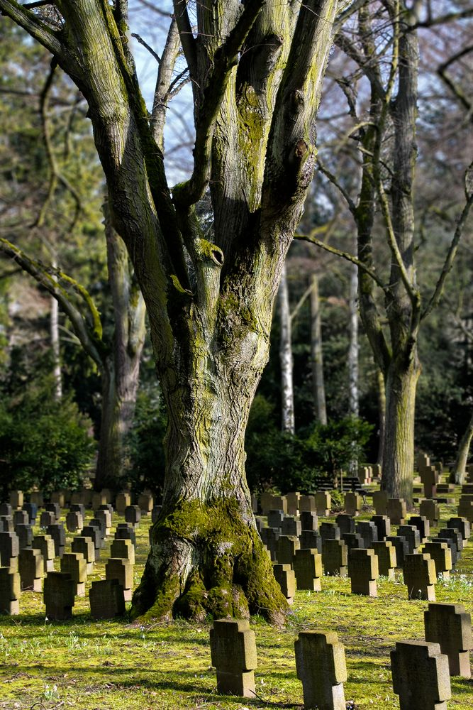 Hauptfriedhof in Frankfurt (2)
