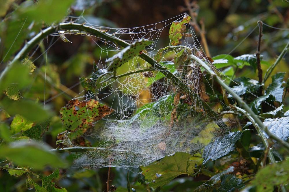 Hauptsache die Spinne blickt noch durch!