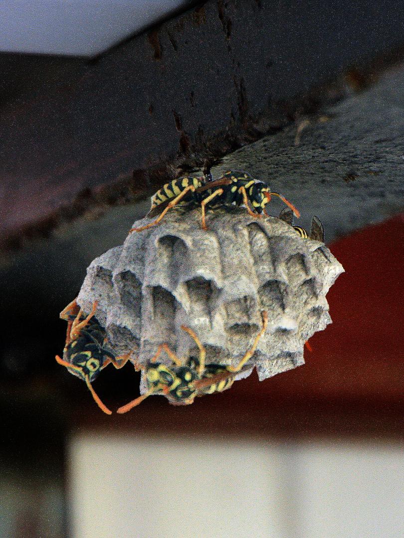 Hausbau foto bild tiere wildlife insekten bilder auf for Hausbau bilder