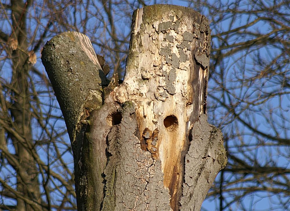 Hausbau foto bild pflanzen pilze flechten b ume for Hausbau bilder
