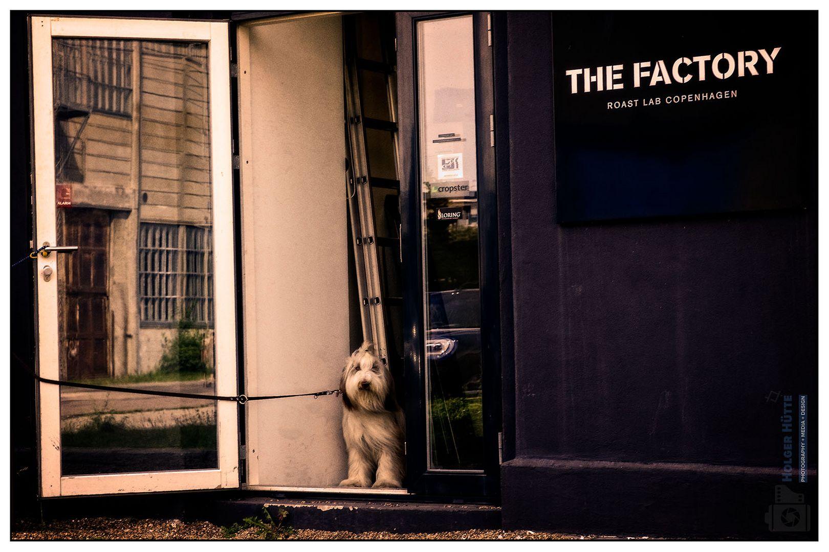 Haushund von THE FACTORY