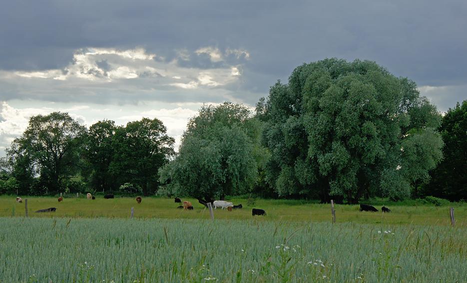 Havelland, 19.06.10 – 01