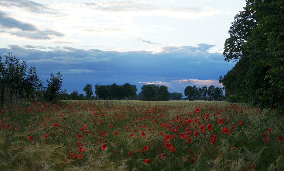 Havelland, 19.06.10 – 04