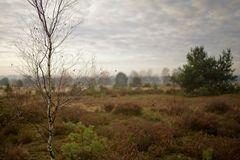 Haverbecker Heide im November 2011