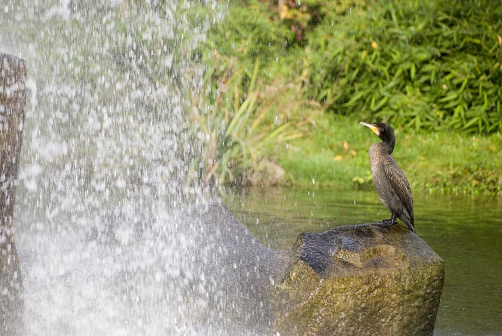 Having a shower, hoping for fish.