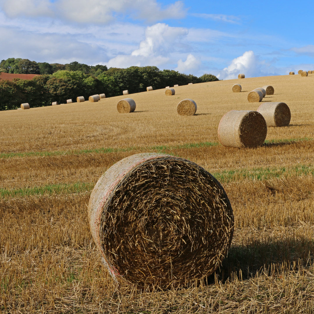 hay bales near st abbs 3b