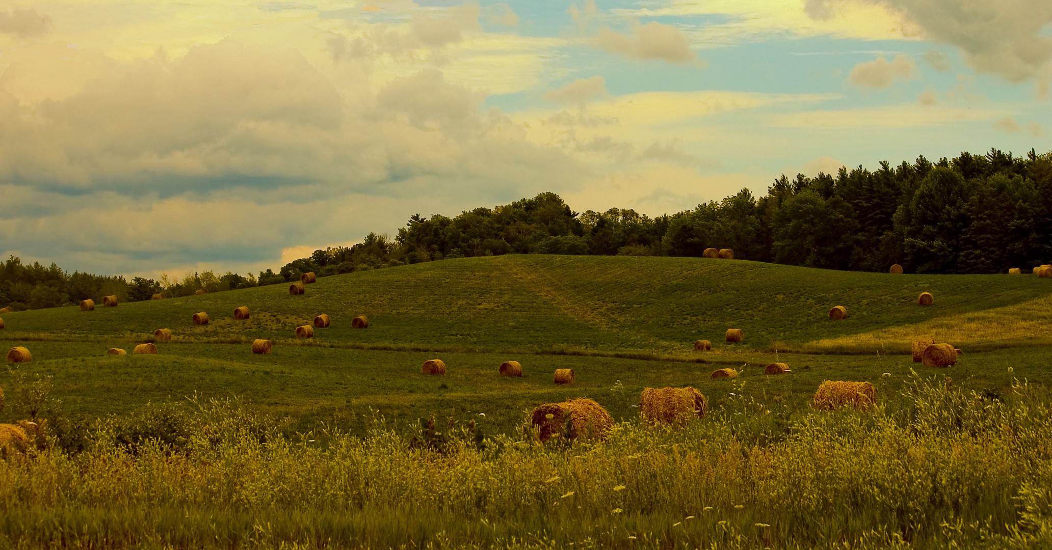 Hay Harvest in Uxbridge, Ontario, Canada