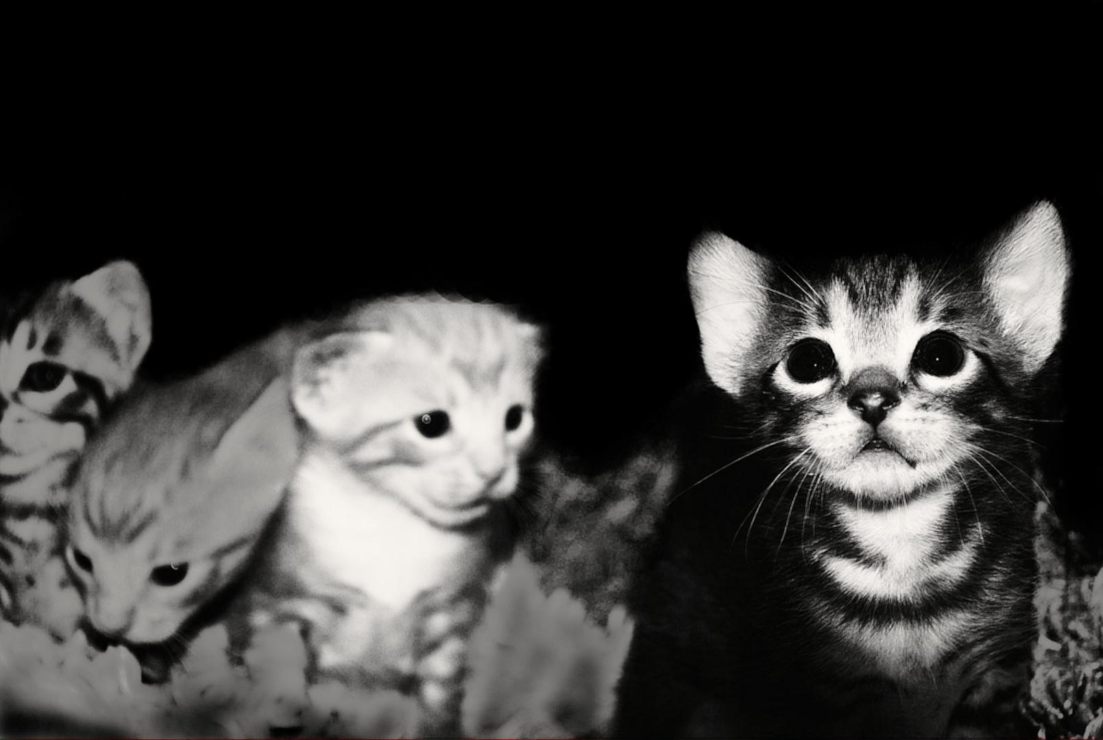 """"""" Hay, kitty........ """""""