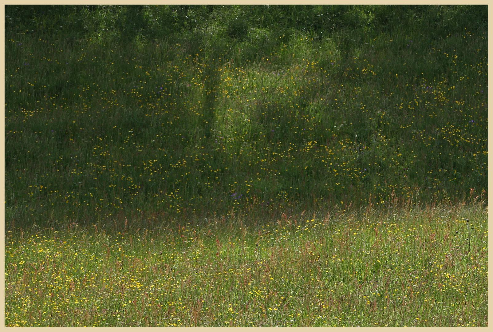 hay meadow 17 near muker