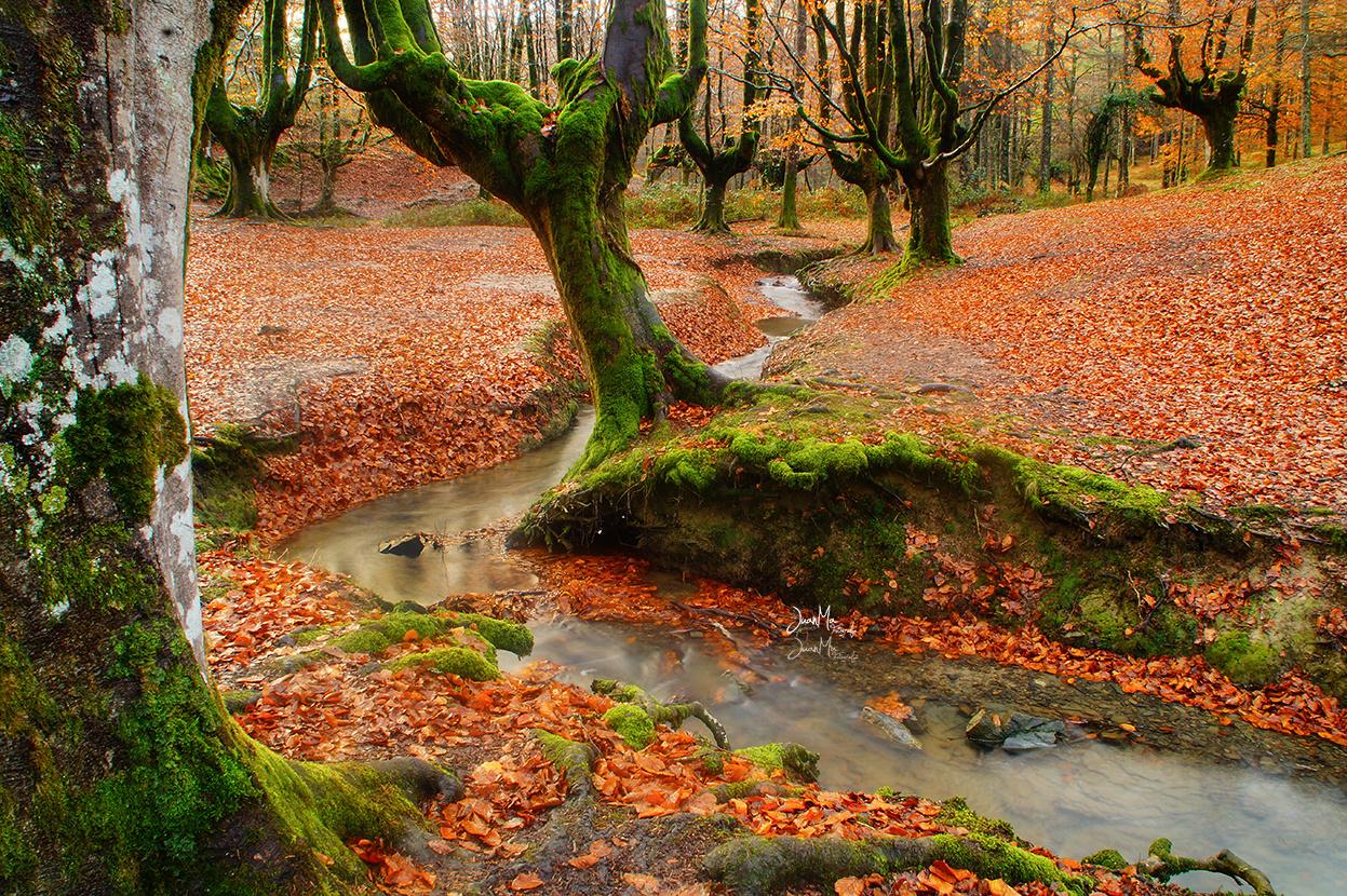 Hayedo de Otzarreta: Bosque encantado.