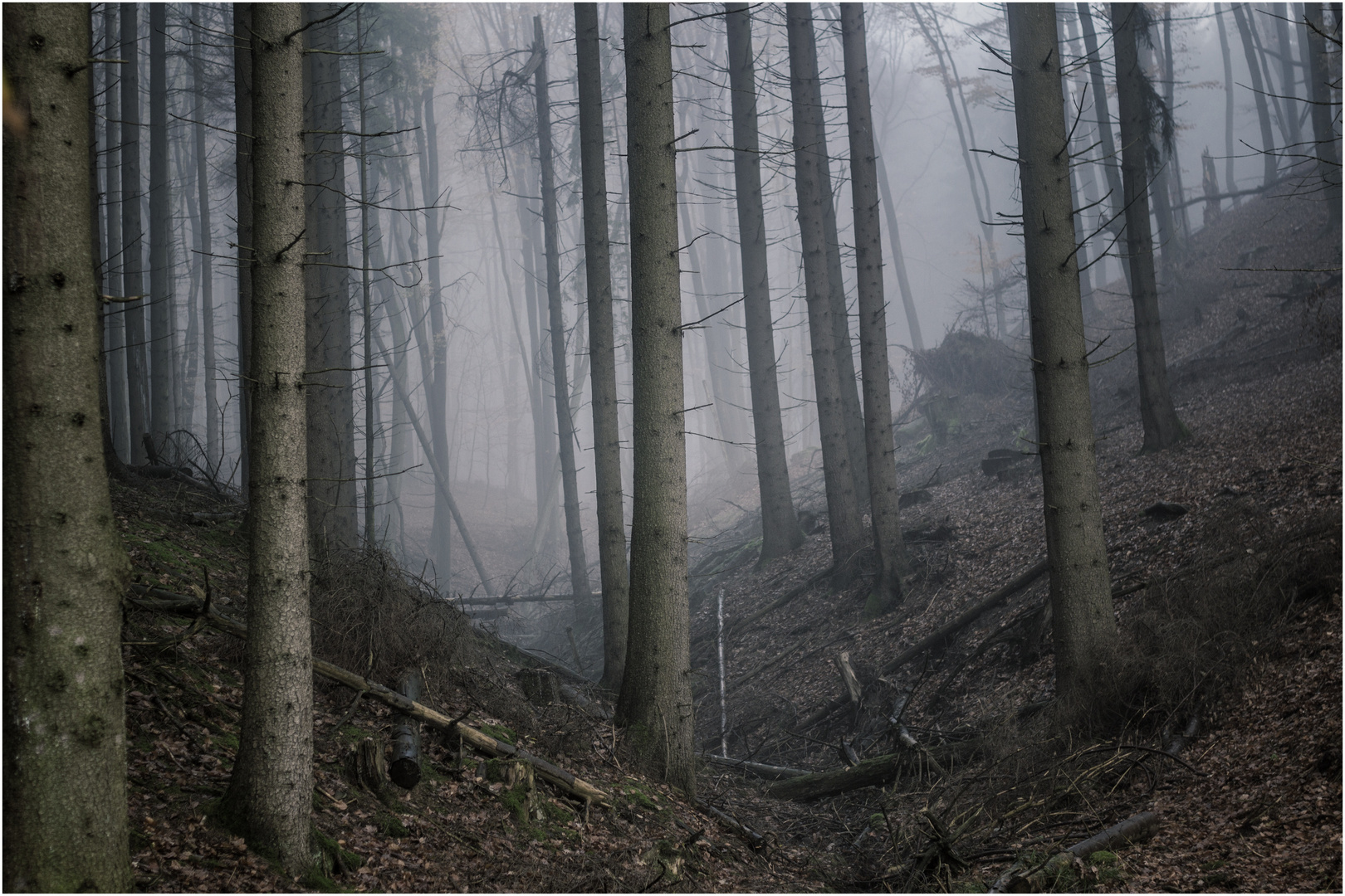 Hazy Woods I.