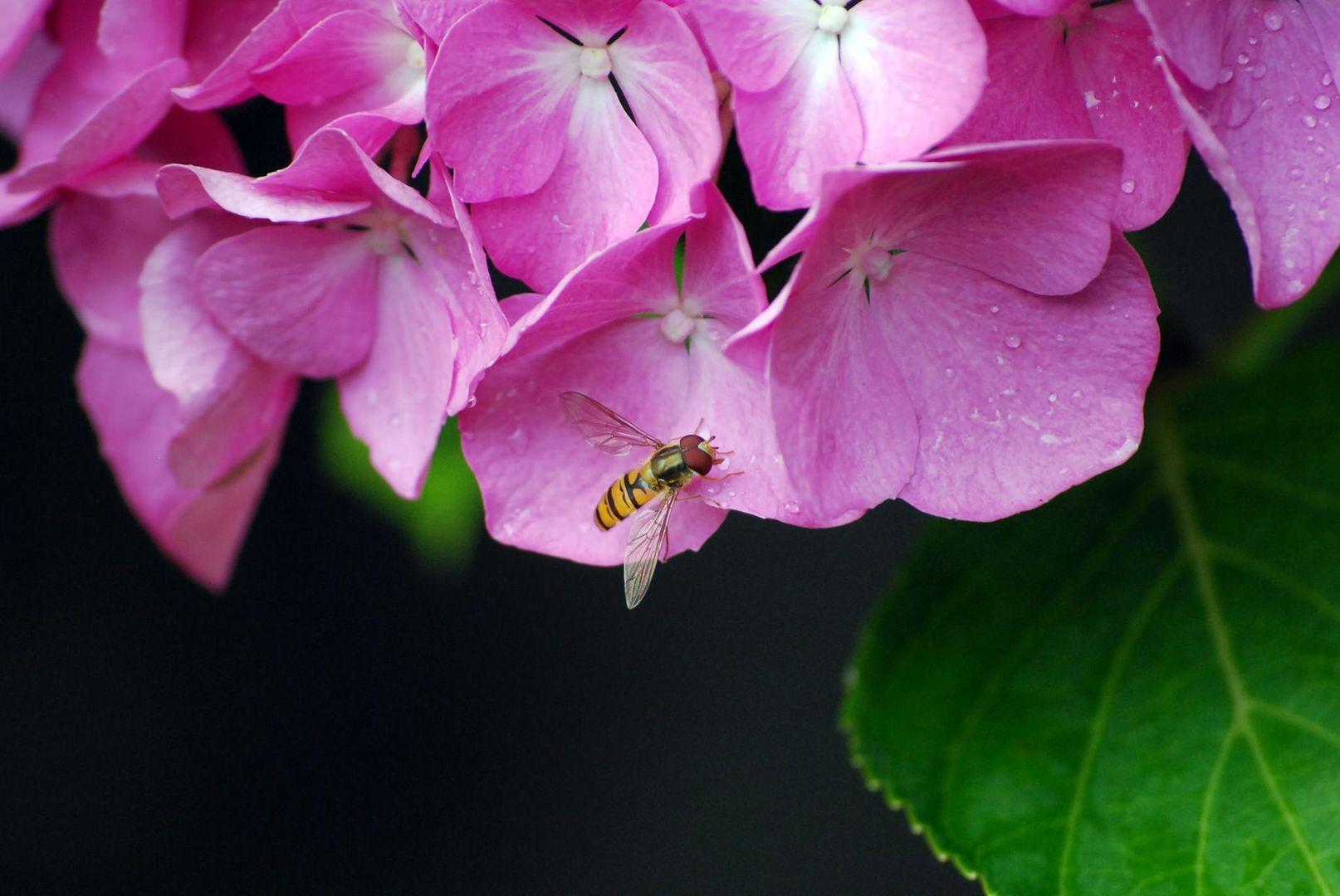 HD Bees
