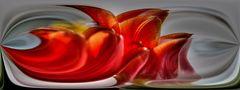 HDR - Tulpen