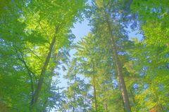 HDR-Wald 1