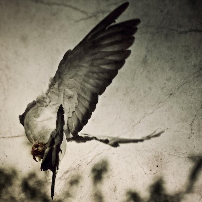 Headless Angel
