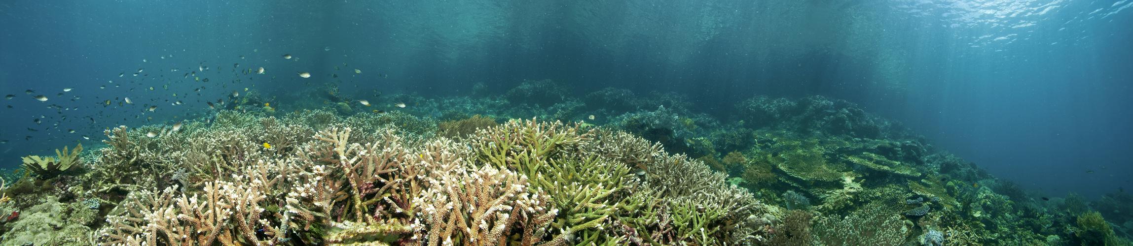 - Healthy reefs (Panorama)