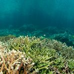 - Healthy reefs (Panorama)