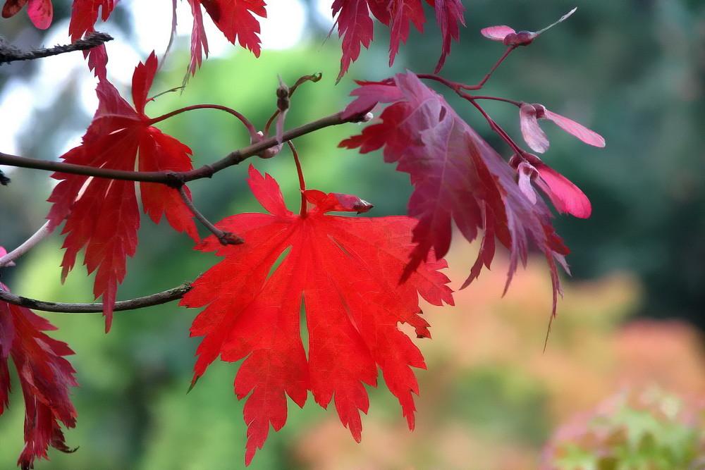 Heart of Autumn (2)