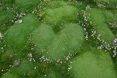 Heart of ireland