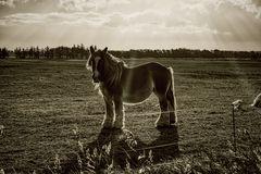 Heavy Horse monochrome
