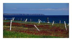 Hebridean Tour: Drying Green - Trockenleinen