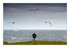 Hebridean Tour: Seagulls - Möwen