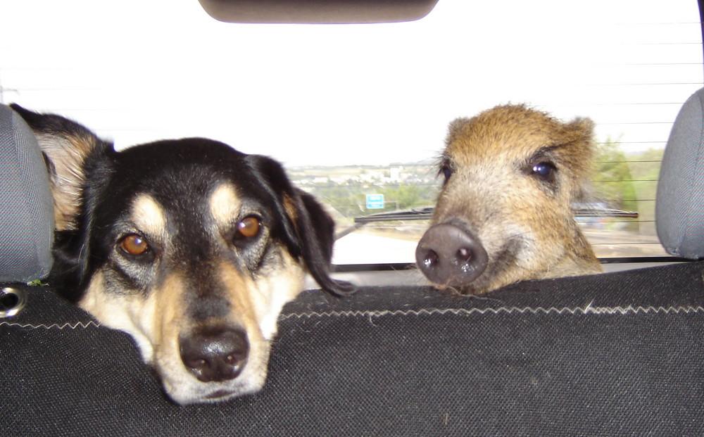 """Hee Hundemama, wo gehts denn hin?"""