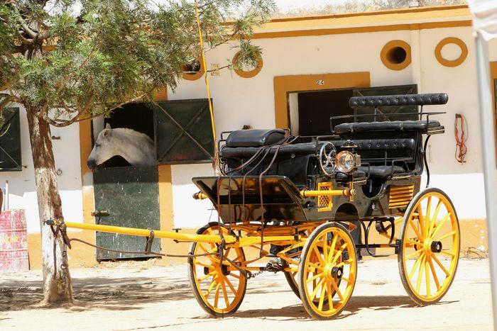 Heeresgestüt in Jerez