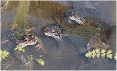 heftig was los in meinem Teich