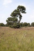 Heide 2