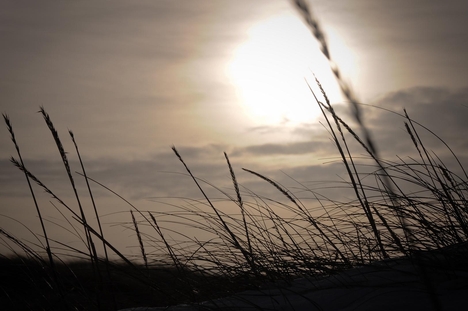 Heide Gegenlicht