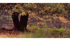 Heide-Herbst