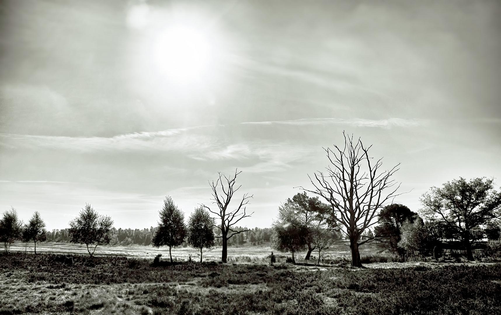 Heide Herbst
