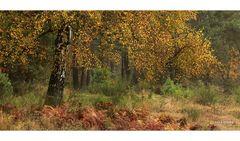 Heide-Herbst mit Birke