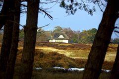 Heide im März Insel Hiddensee